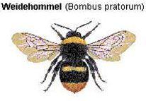 Hommels - De WeideHommel
